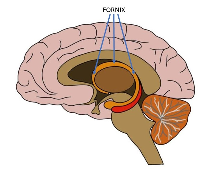 """<p>Know Your Brain<strong>Fornix<a href=""""/blog/know-your-brain-fornix"""">Read more →</a></strong></p>"""