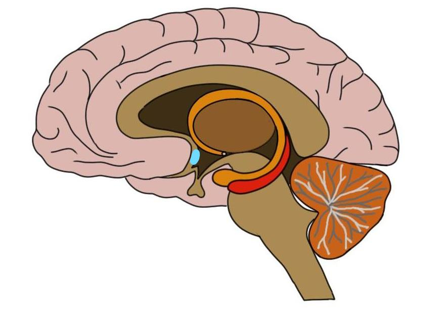 """<p>Know Your Brain<strong>Preoptic Area<a href=""""/blog/know-your-brain-preoptic-area"""">Read more →</a></strong></p>"""