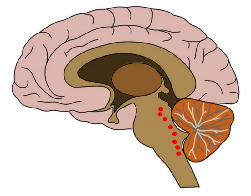 """<p>Know Your Brain<strong>Raphe Nuclei<a href=""""/blog/know-your-brain-raphe-nuclei"""">Read more →</a></strong></p>"""