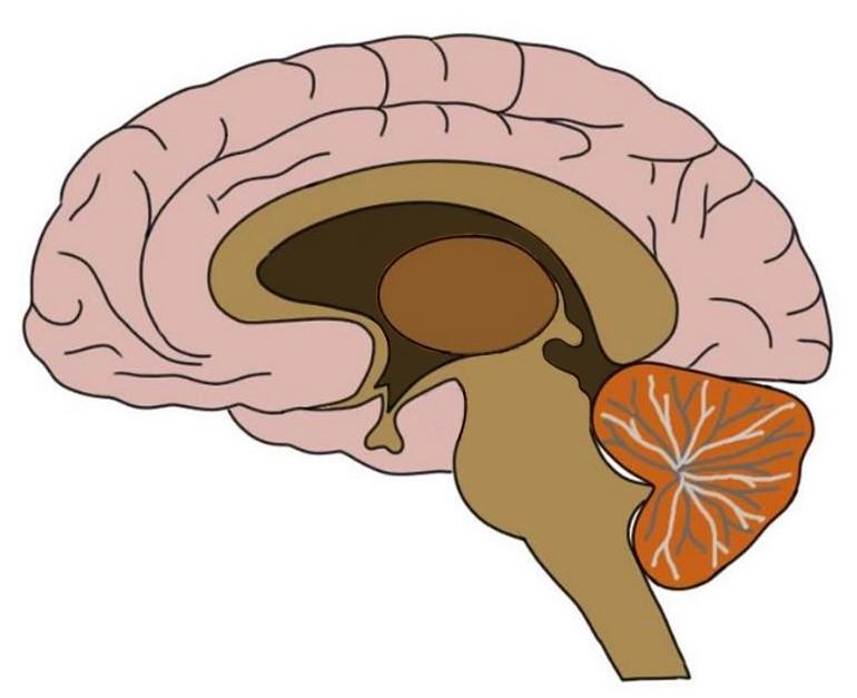 "2-Minute Neuroscience<a href=""/blog/2-minute-neuroscience-pineal-gland"">→</a><strong>Pineal Gland</strong>"