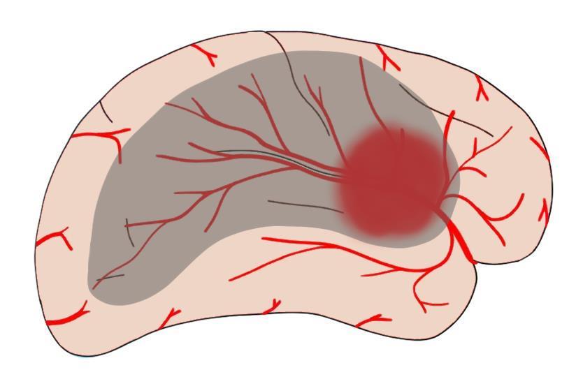 "2-Minute Neuroscience<a href=""/blog/2-minute-neuroscience-stroke"">→</a><strong>Stroke</strong>"