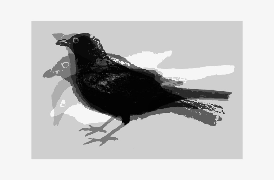 Blackbird  Date printed 2003 Price £1000  SOLD OUT  Print type Screen Print Number in edition 10 Colour Five colours Paper type Fabriano 50% Cotton. Paper size 100 x 70cm Image area 70 x 46cm Signed By artist in pencil
