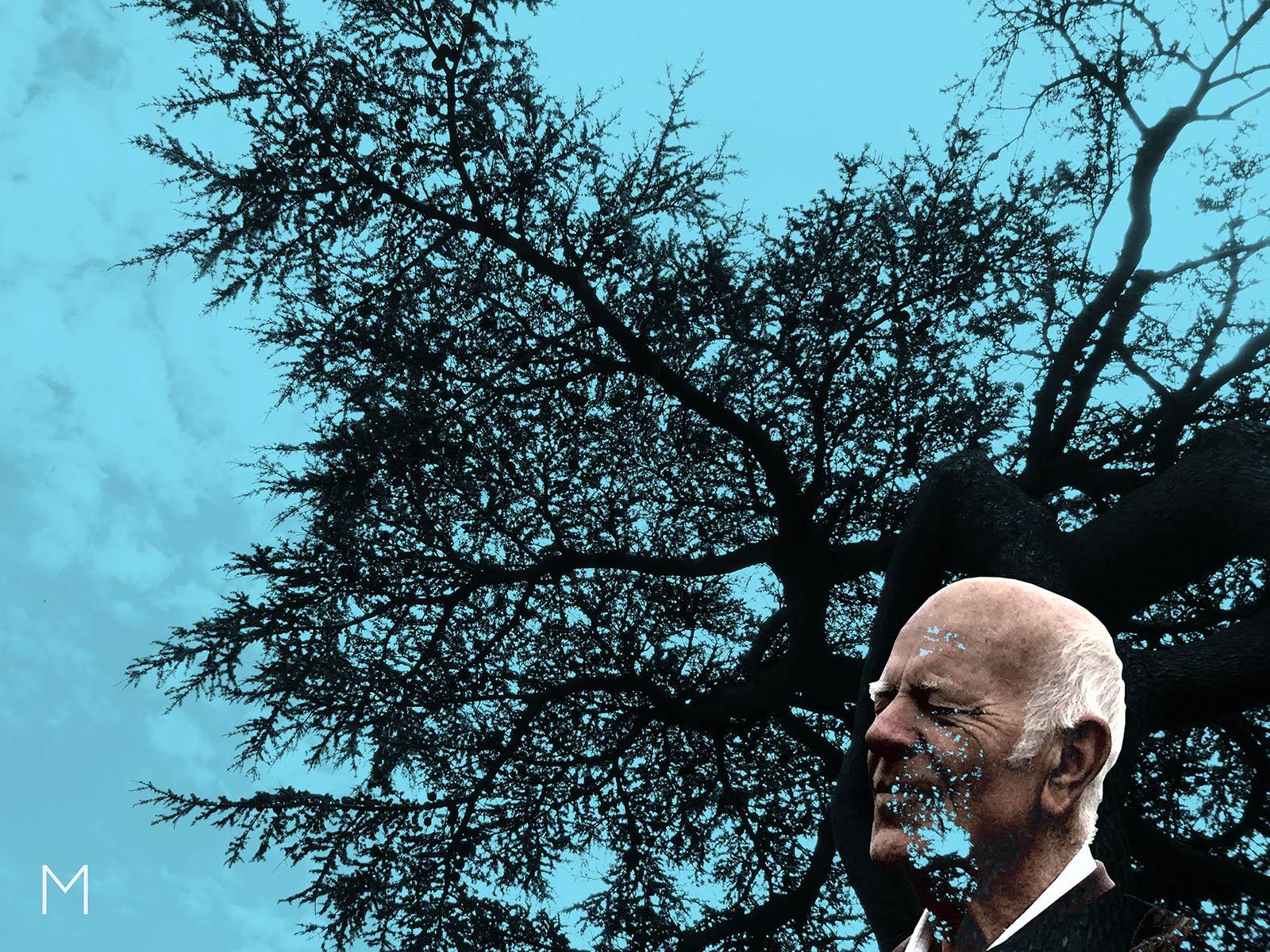 The Cedar Tree