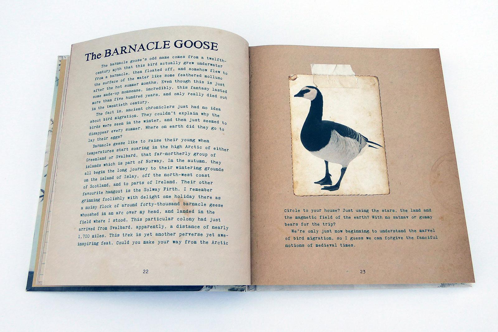 joemagee-BB-BirdSpreads-01.jpg