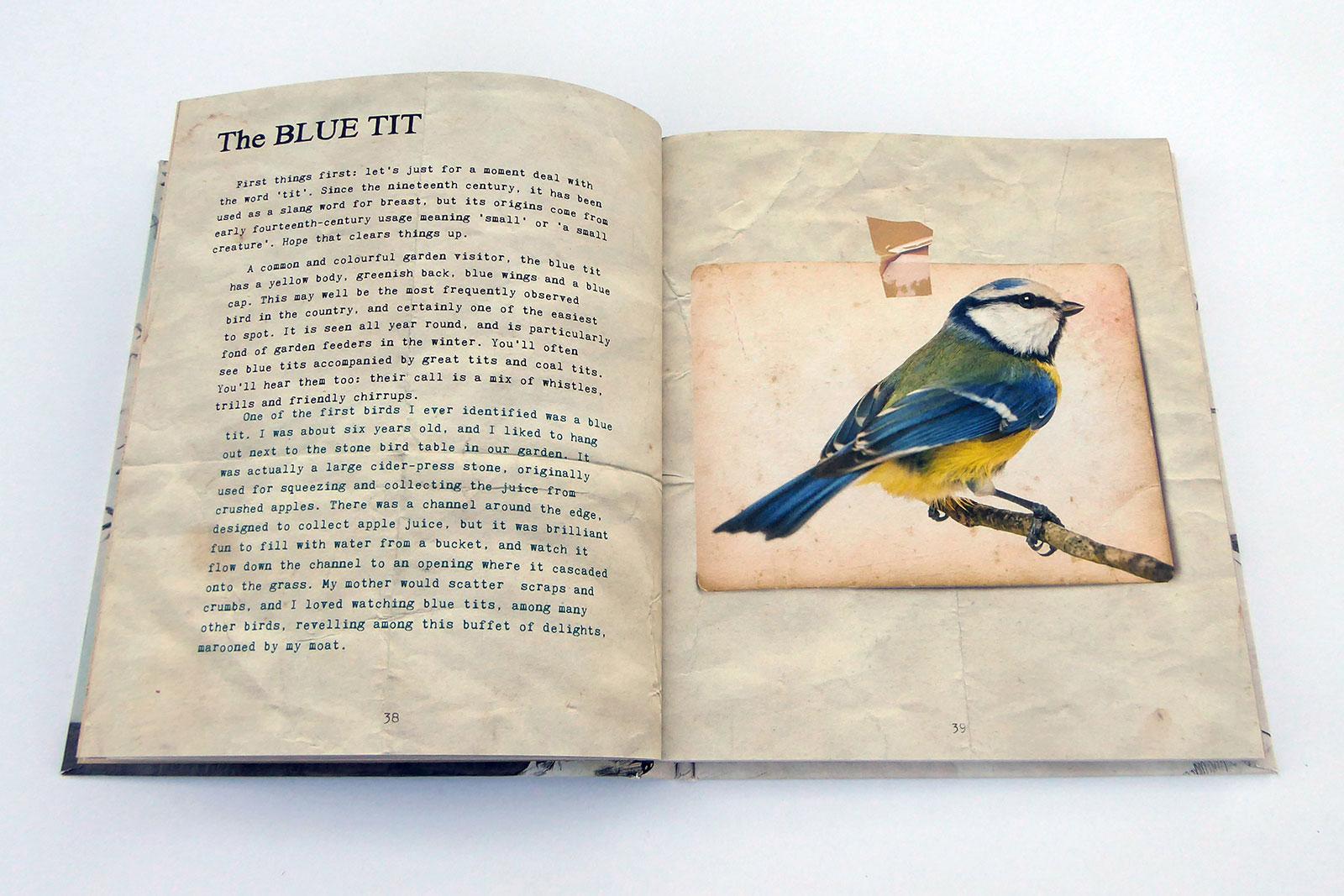joemagee-BB-BirdSpreads-03.jpg