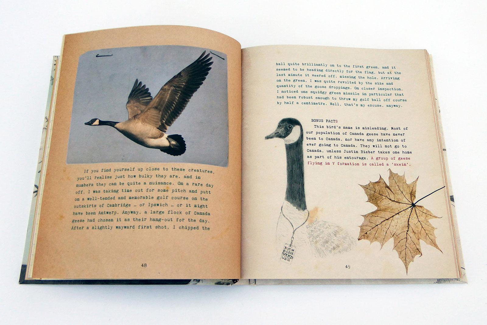 joemagee-BB-BirdSpreads-05.jpg