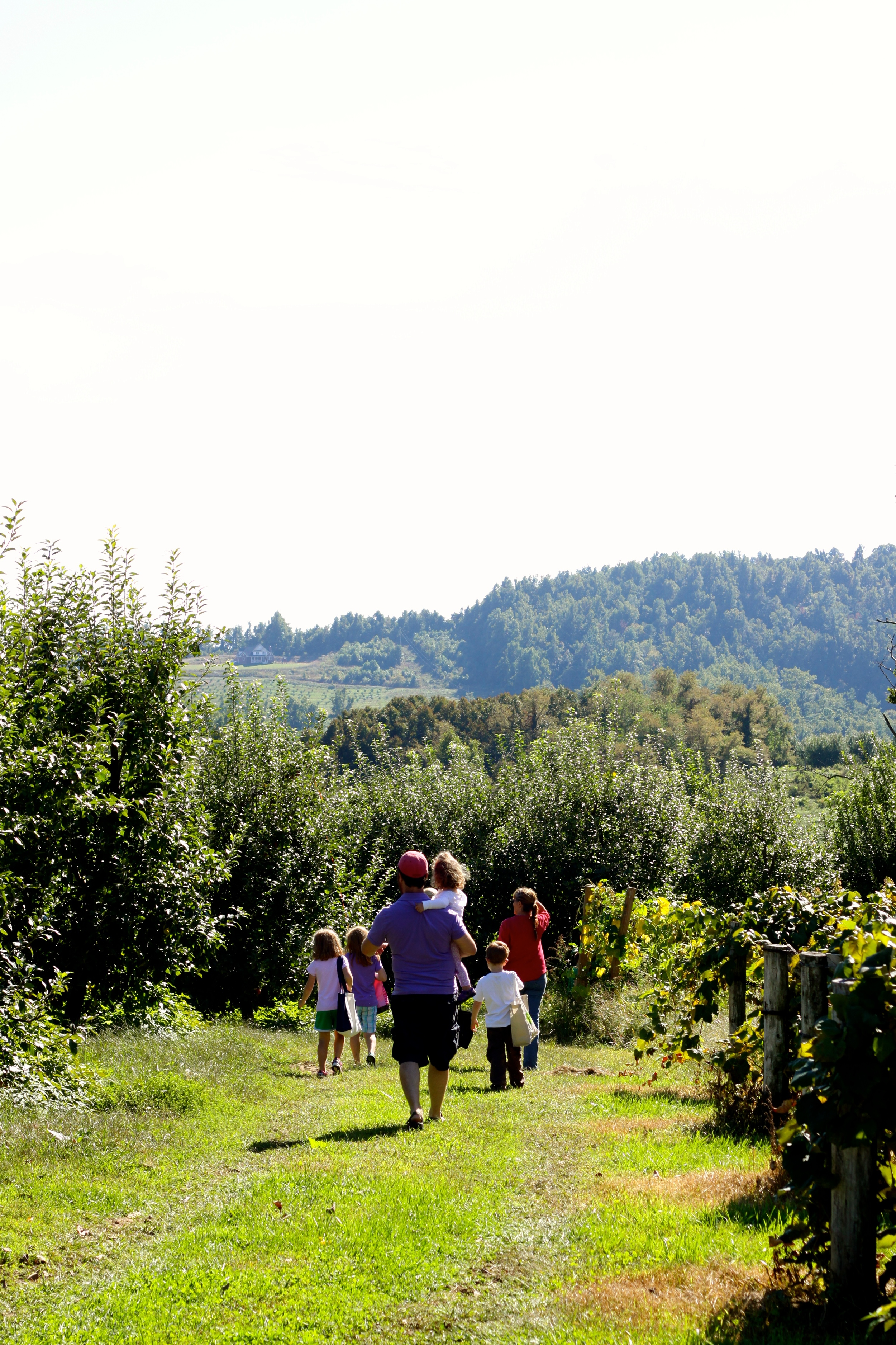 Private apple picking party. You can tell that this was early in the venture because the kids are still carrying the apple bags.