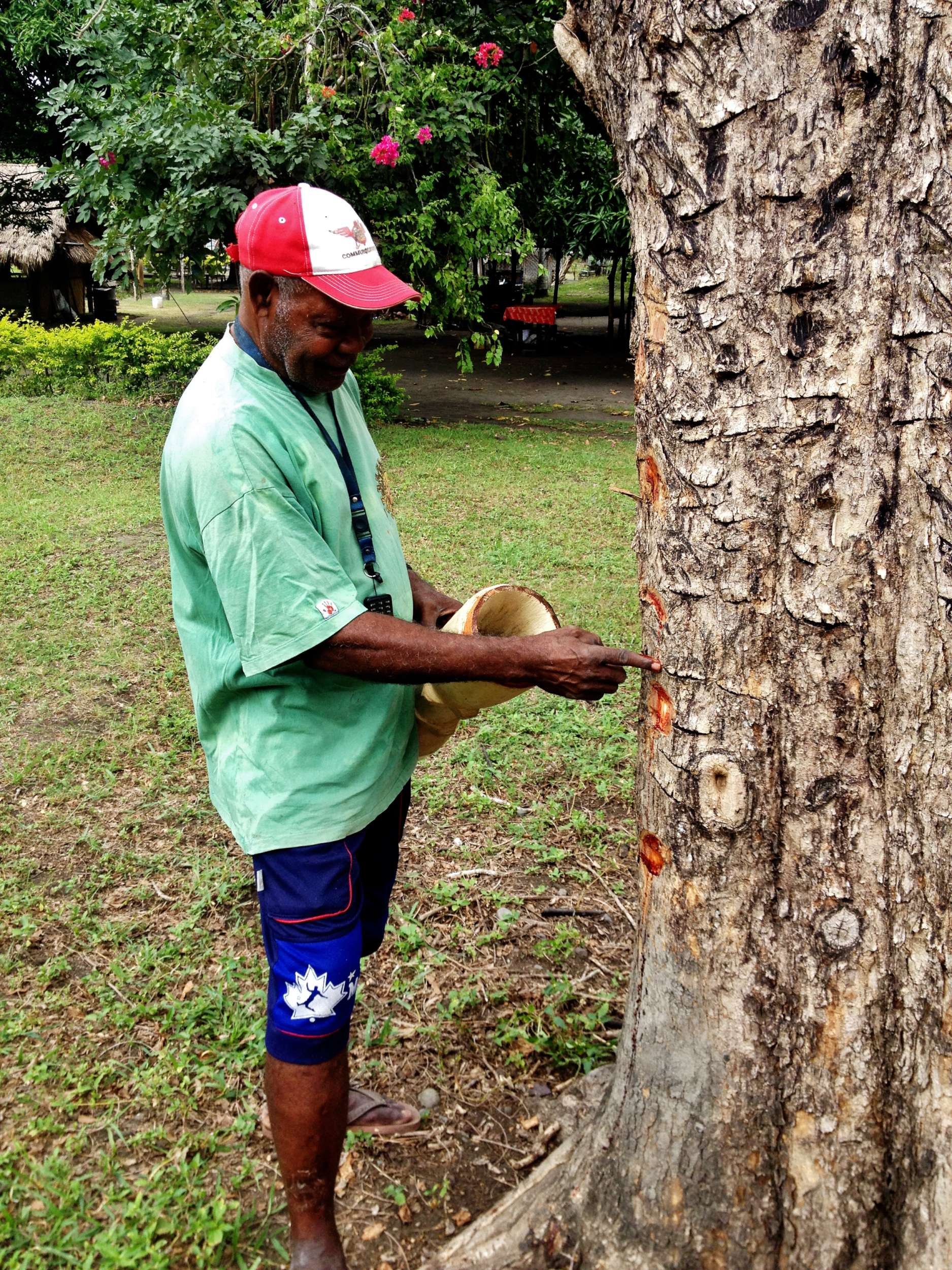 Papa uses (what I think is) Rosewood sap for adhesive for the kundu pailai skin.