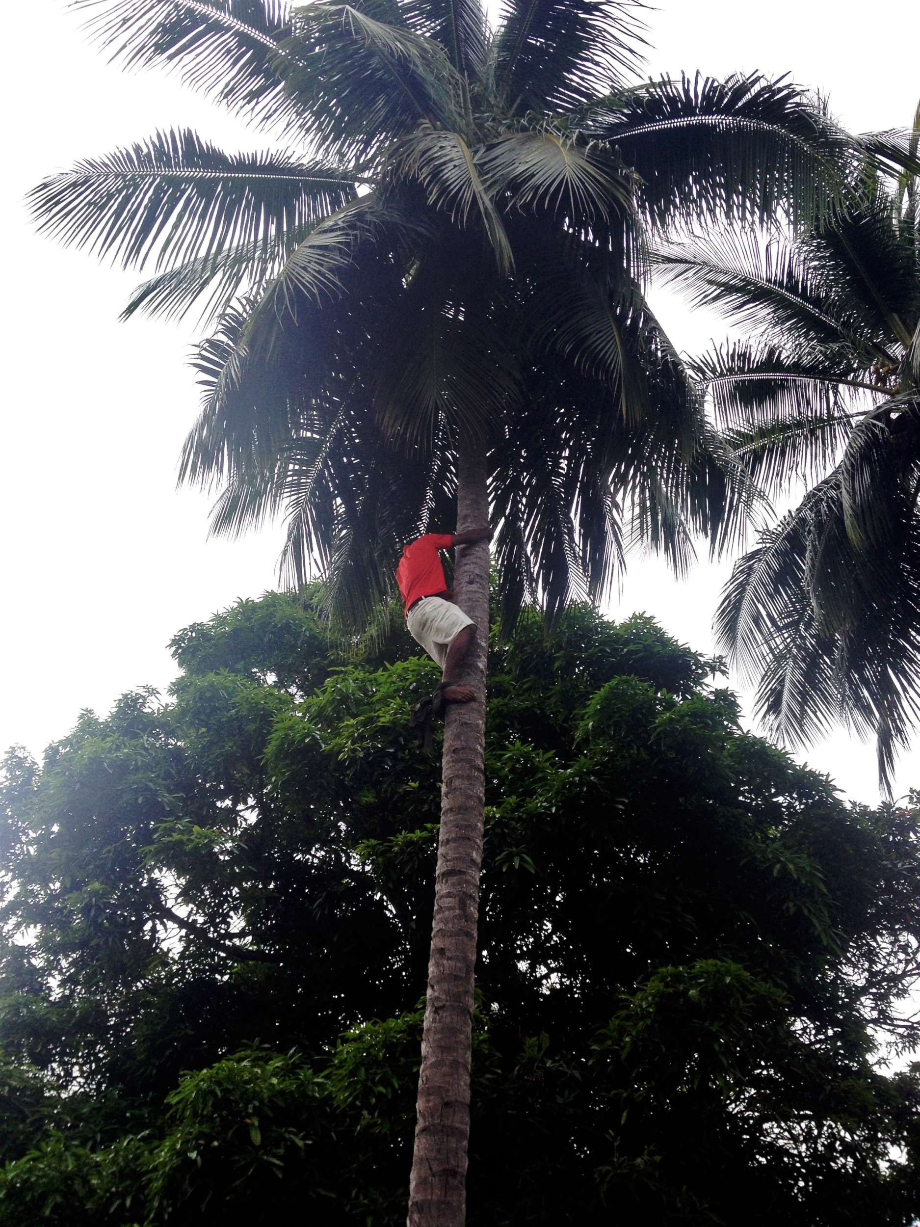 One of the many times that Michael scaled a coconut tree like it was nothing.