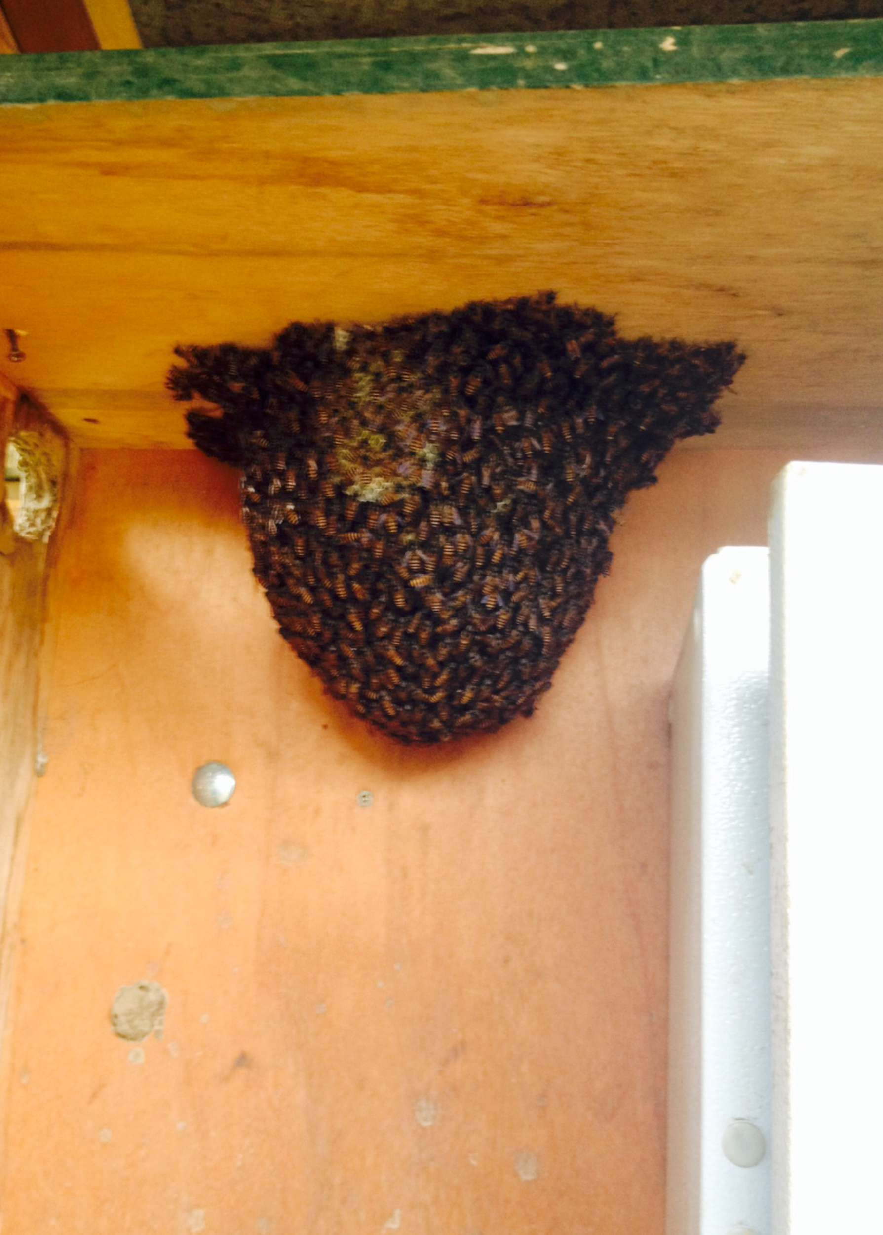 Bees!!!!!!!!!!!