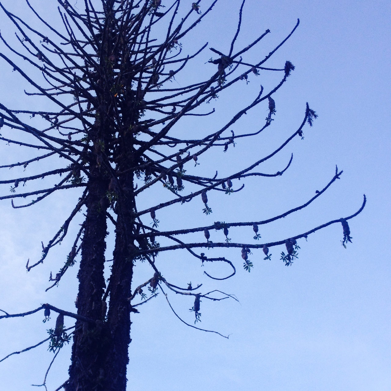 I was amazed at the number of orchids that had made their home in this dead pine tree.