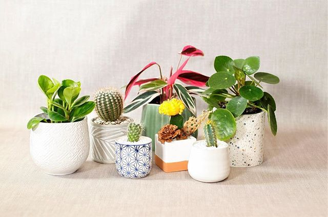 Feeling a case of the 'mondays'... stop by the shop to pick up one of our desktop potted plants. They're the perfect start to the week!