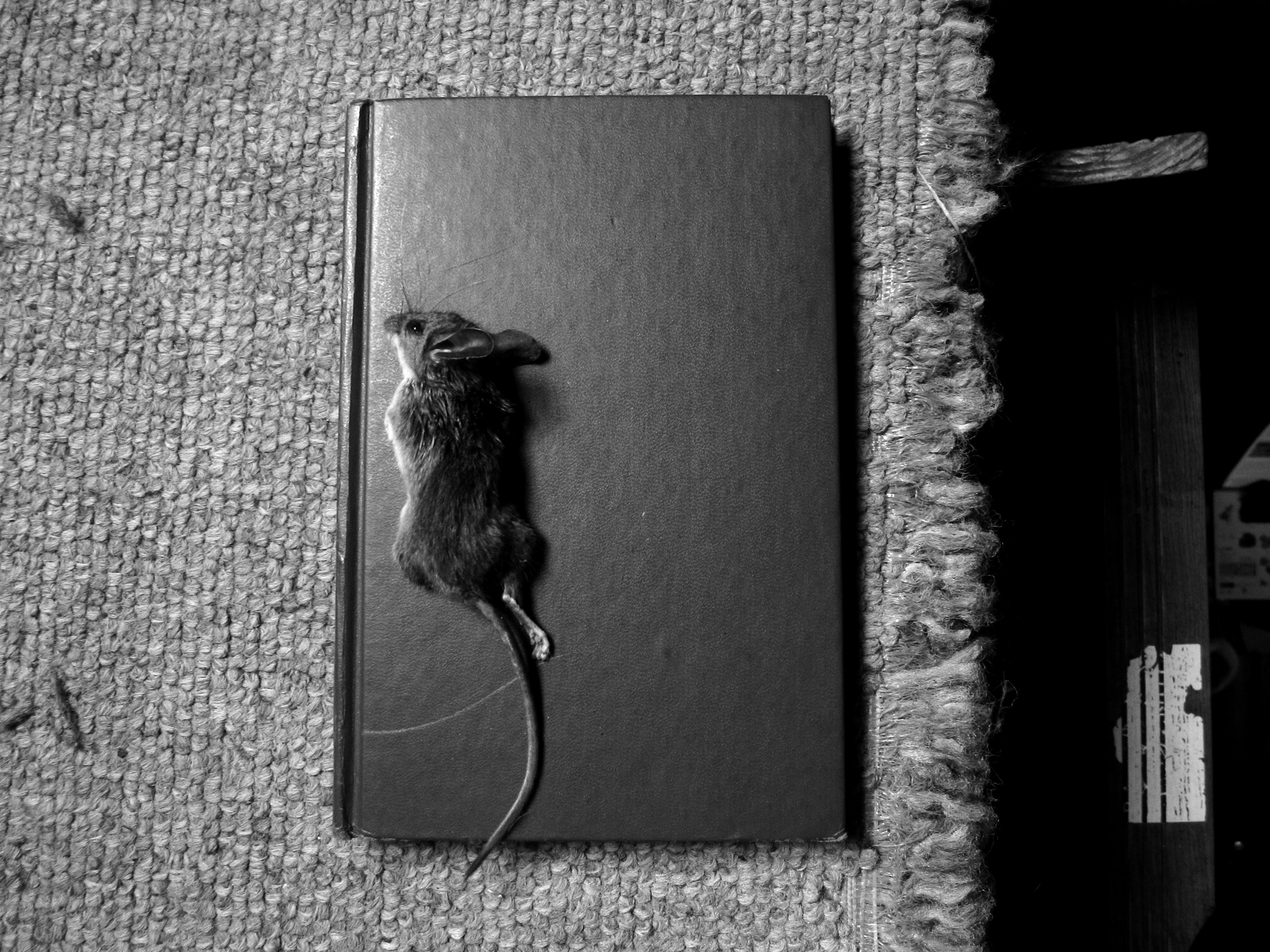 The Blind Mouse (see how it runs).jpg