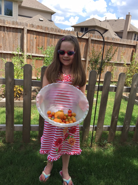 Lady L helped with picking tomatoes.