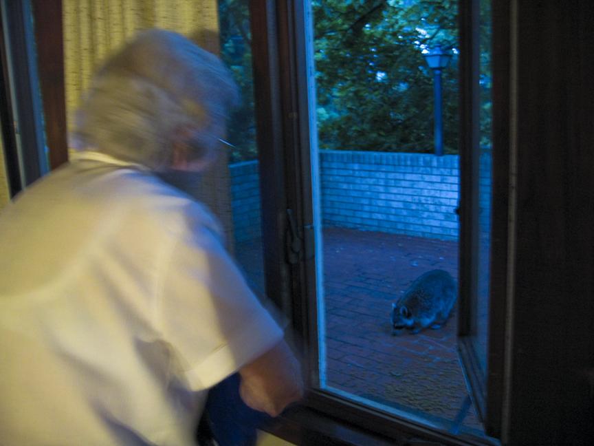 Mamma feeding the Raccoon