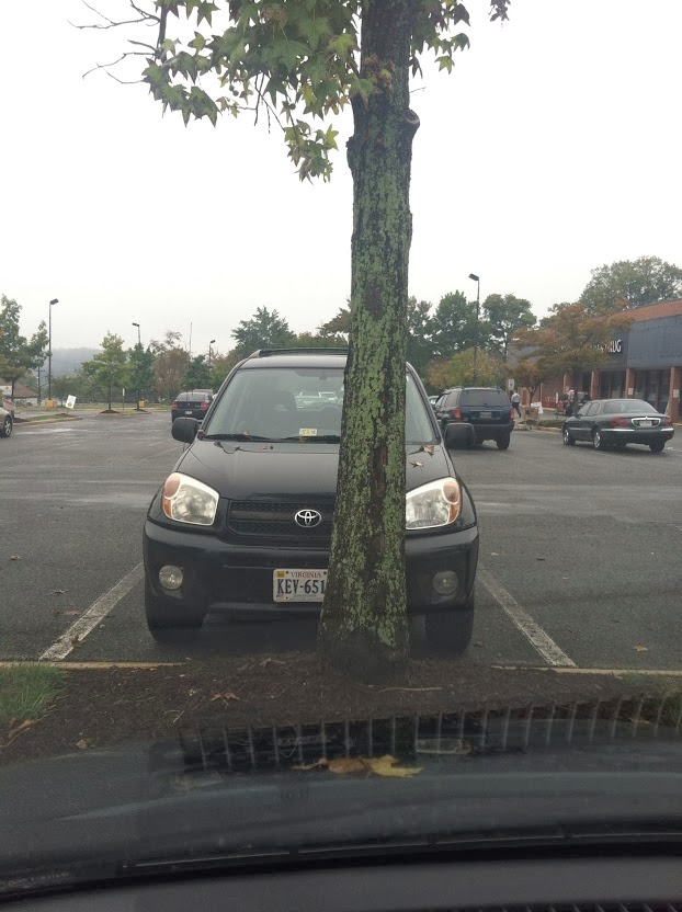 Tree+Parking+lot.JPG