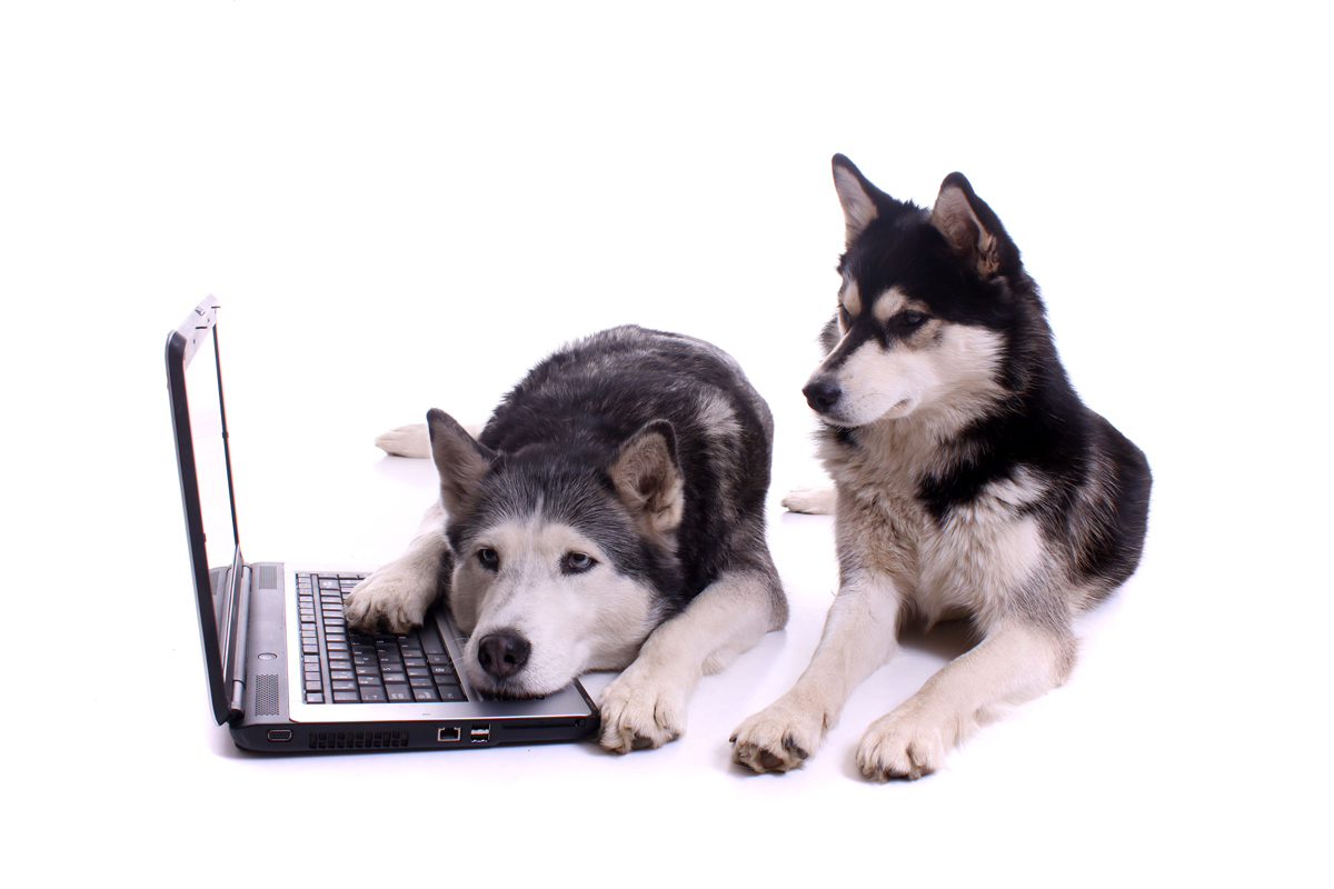 Huskies are also dismayed by idiots on the internet