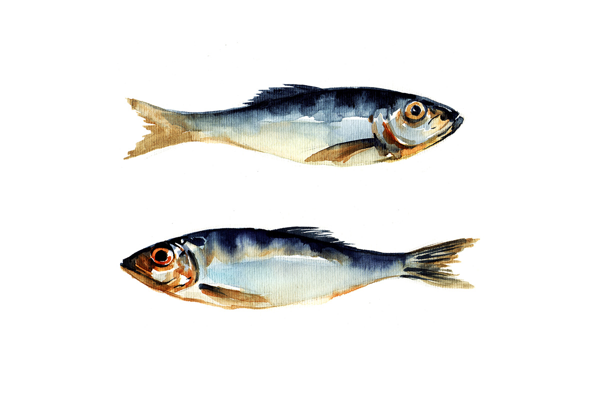 Why do herring make you smarter? Something something  school .