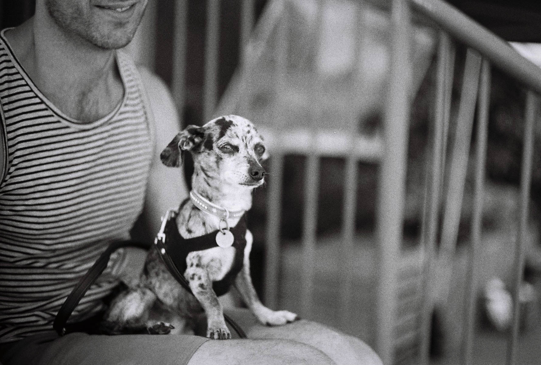 Canon L1, 50mm F1.4 lens. TMax 400, 1/1000 sec. F1.4 in the shade.