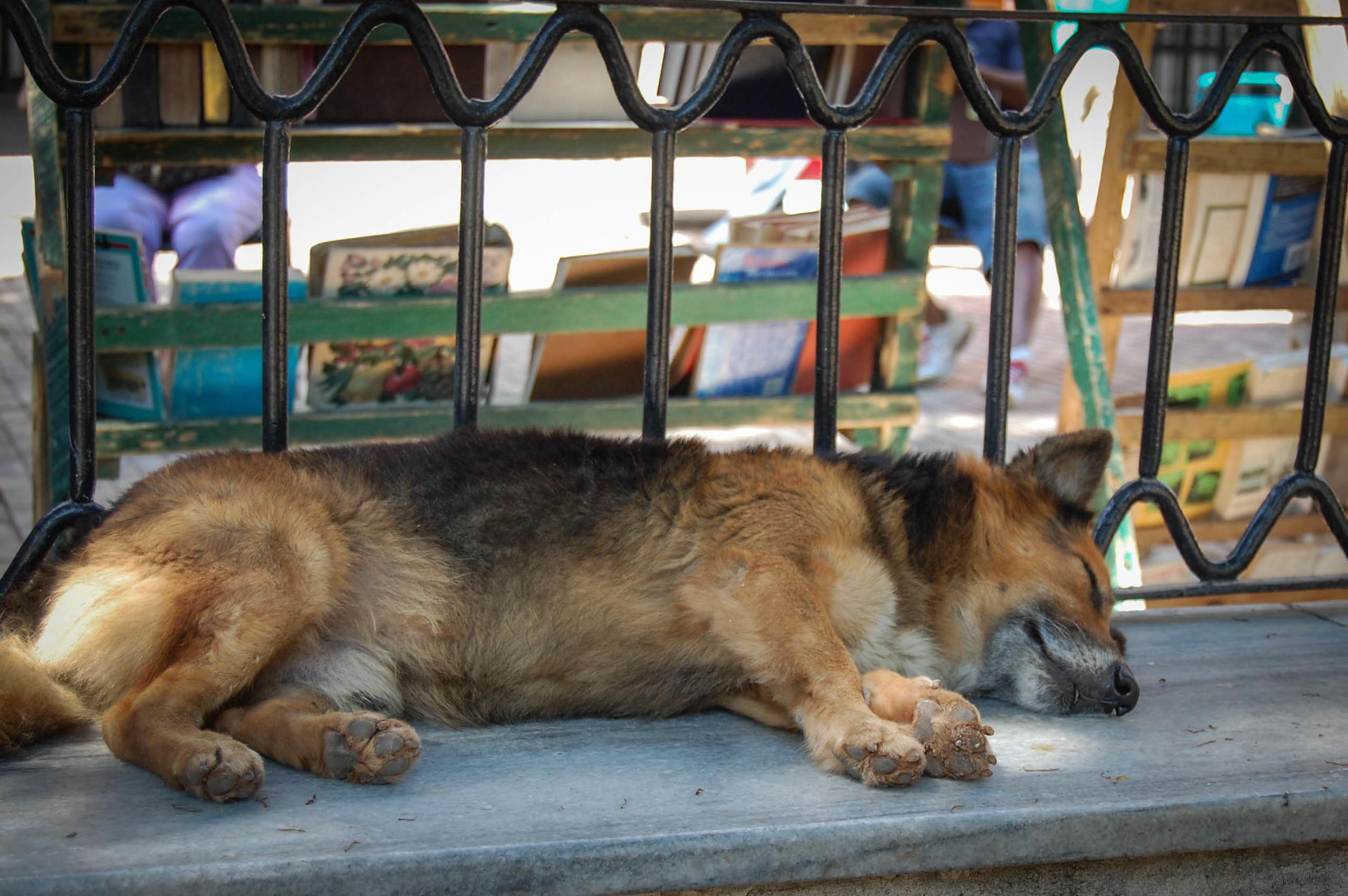 Sleeping dog Old Havana, Cuba Nikon D40, 18-55mm F3.5 3.13