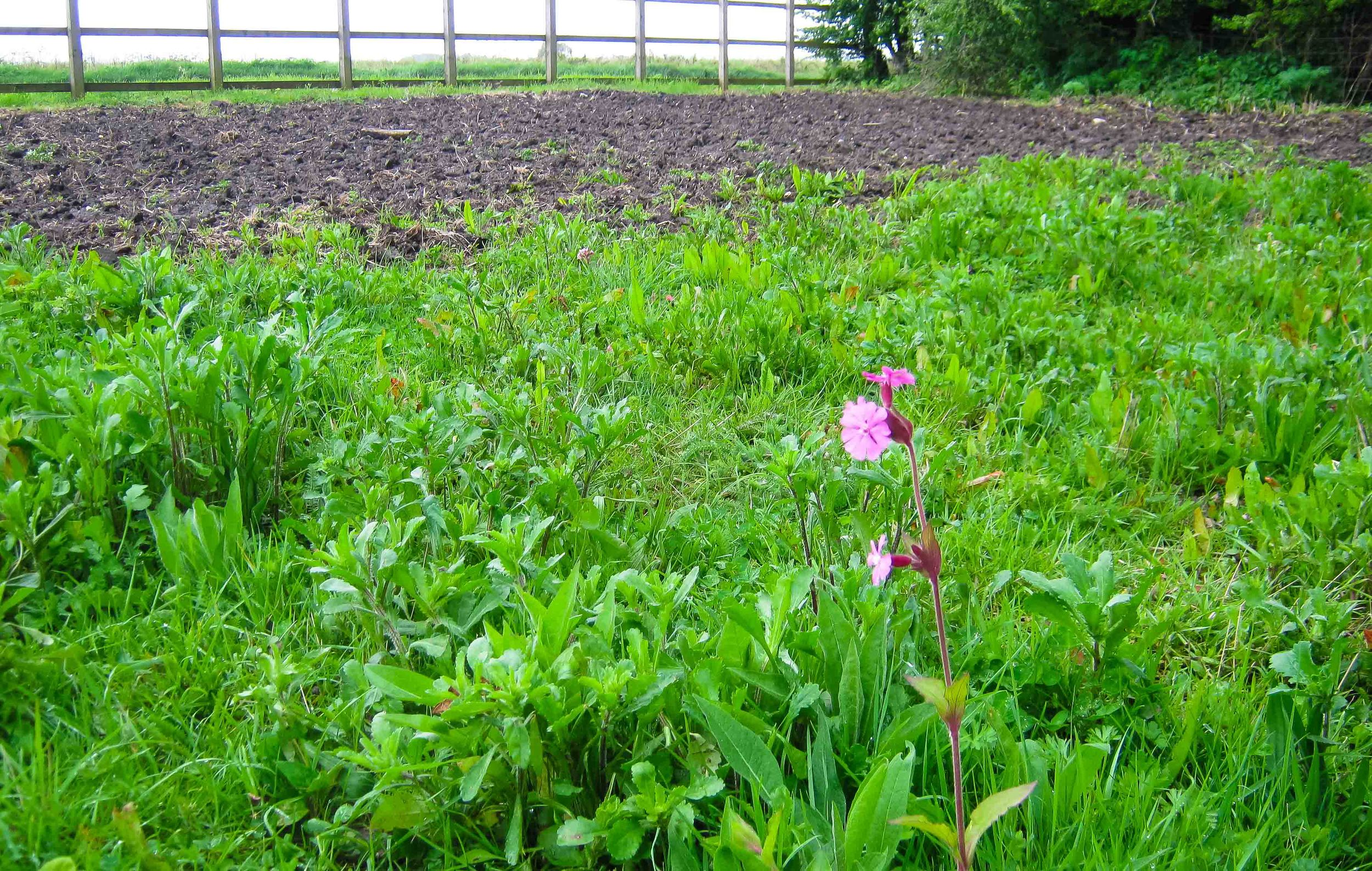 Wildflower mix in foreground; cleared, re-sowed annual mix beyond