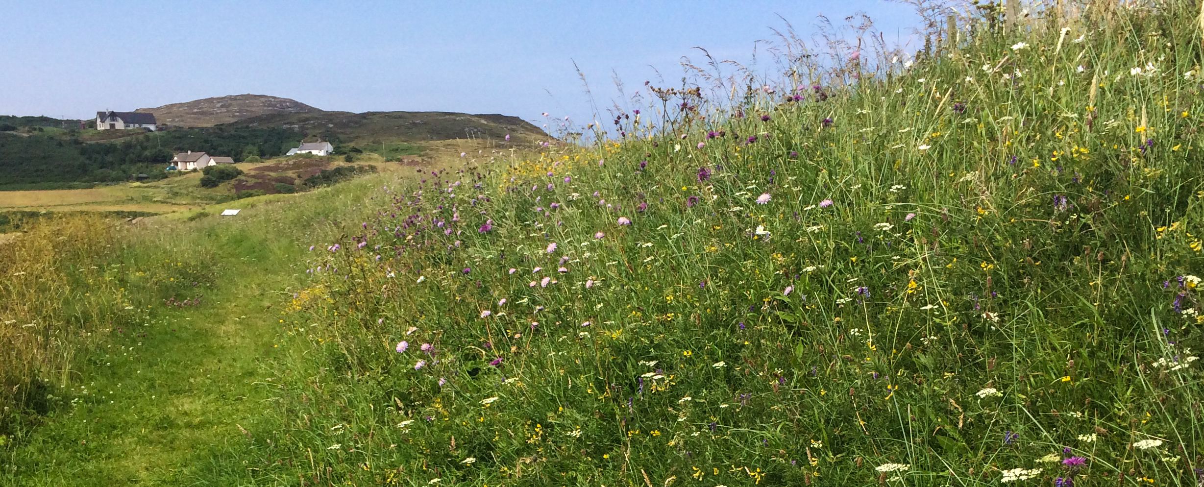 Bumblebee sanctuary at Bettyhill