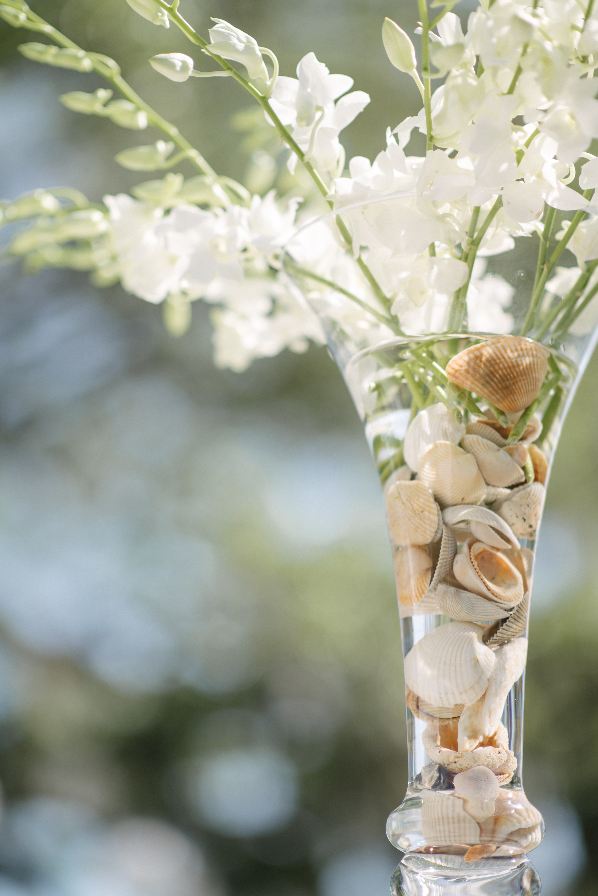 I collected the shells off the beach for the tall arrangements. I used tons of whitedendrobium orchids at the Rehearsal Dinner, then added tons more for the reception.