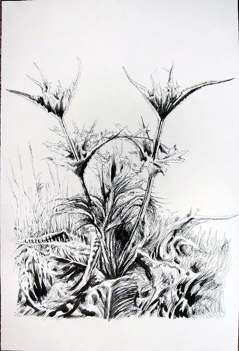 Thistle 5, by Patrick Willett