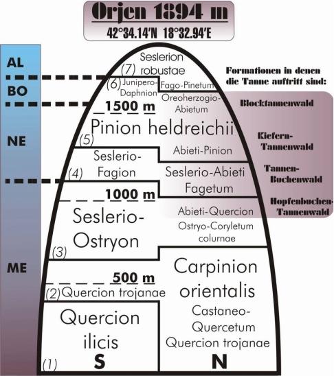 Formacije vegetacije na profilu Orjena