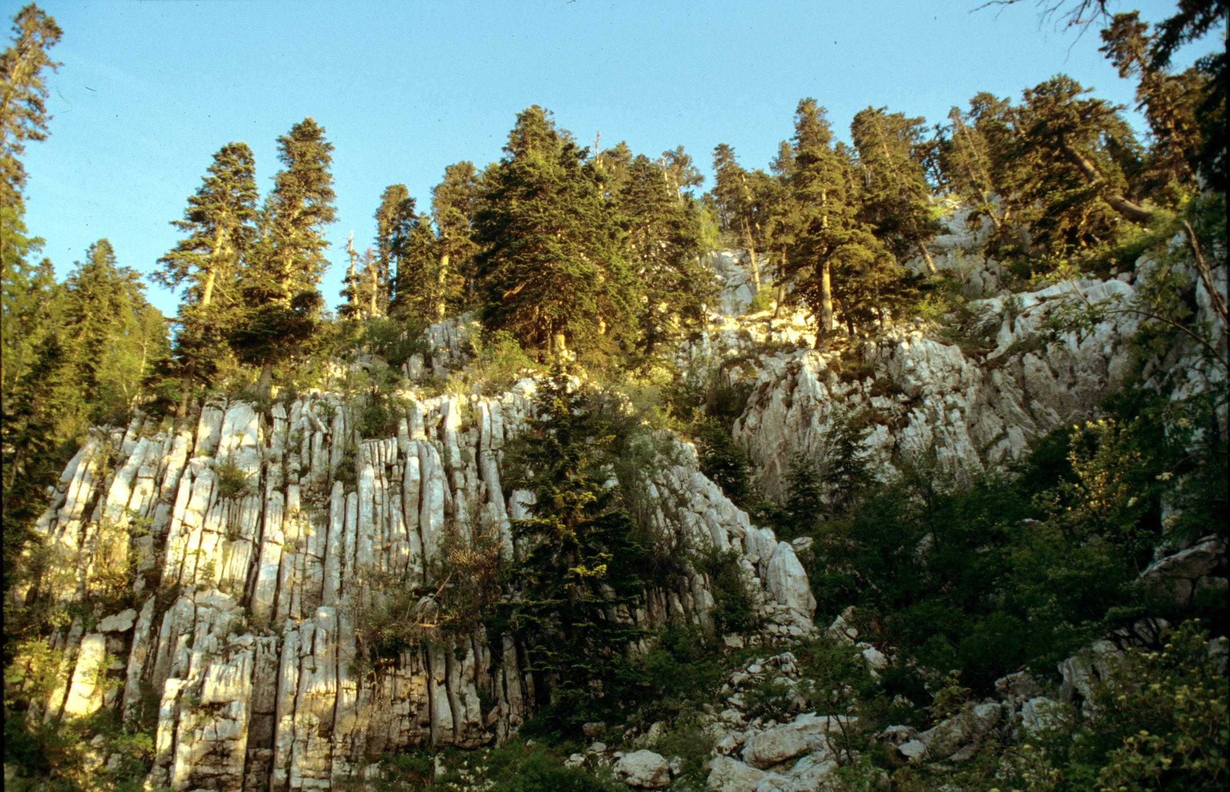 Dinaric_calcareous_fir_forest.jpg
