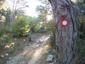 Put ka Koprivnom dolu