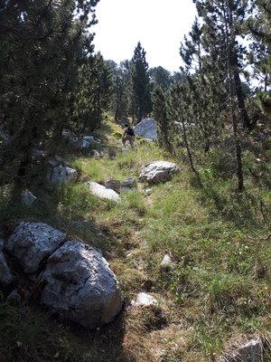 Travnate padine u šumi Munike