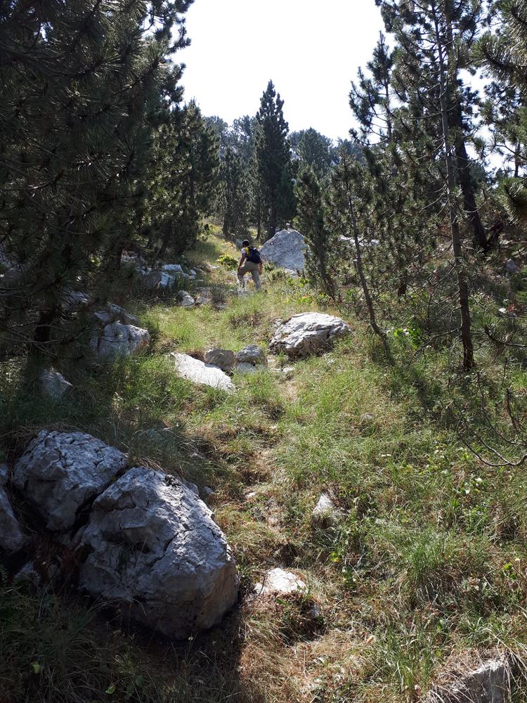 Травнате падине у шуми Мунике