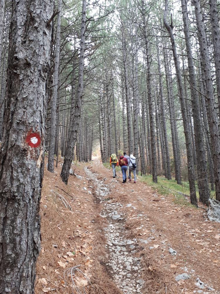 put kro borovu šumu.jpg