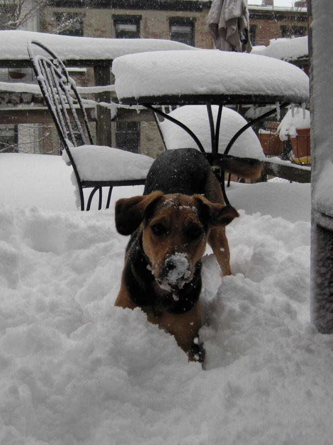 Roo snow.jpg