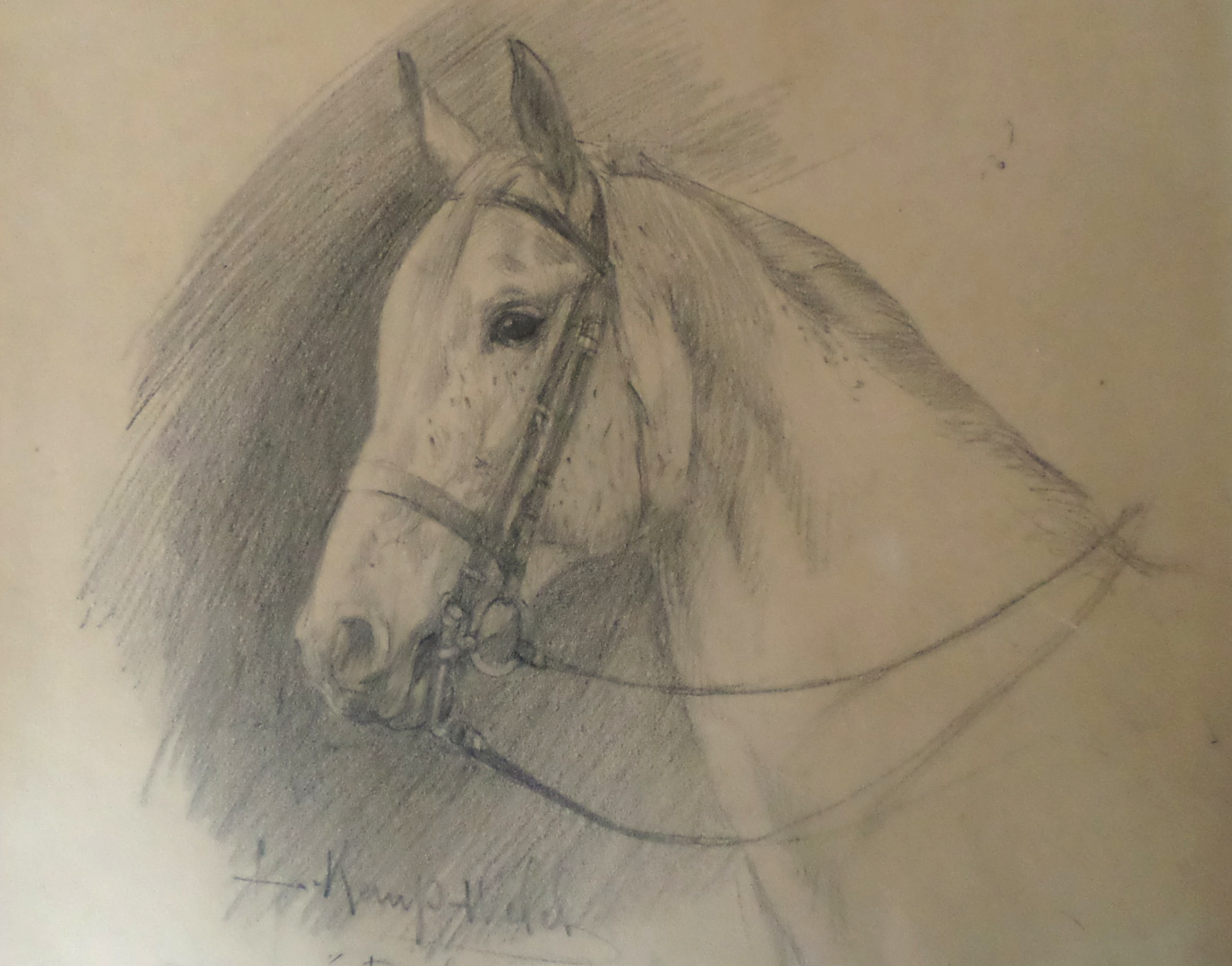 lucy kemp-welch dray horse pencil sketch