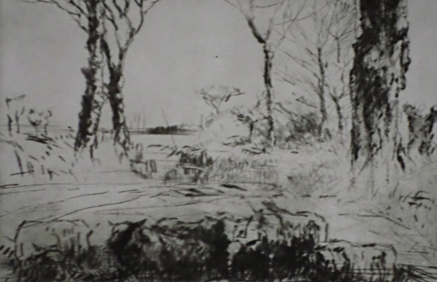 Sheep in Field Etching- Harry Becker
