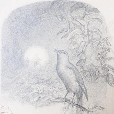 Nightingale - SOLD