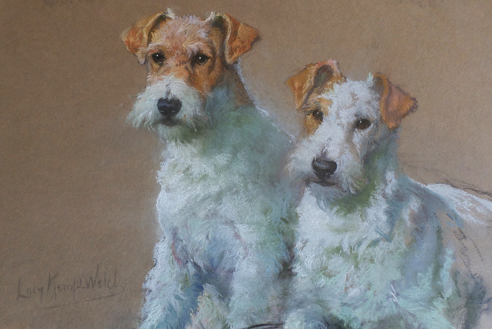 Lucy Kemp Welch fox terriers for sale