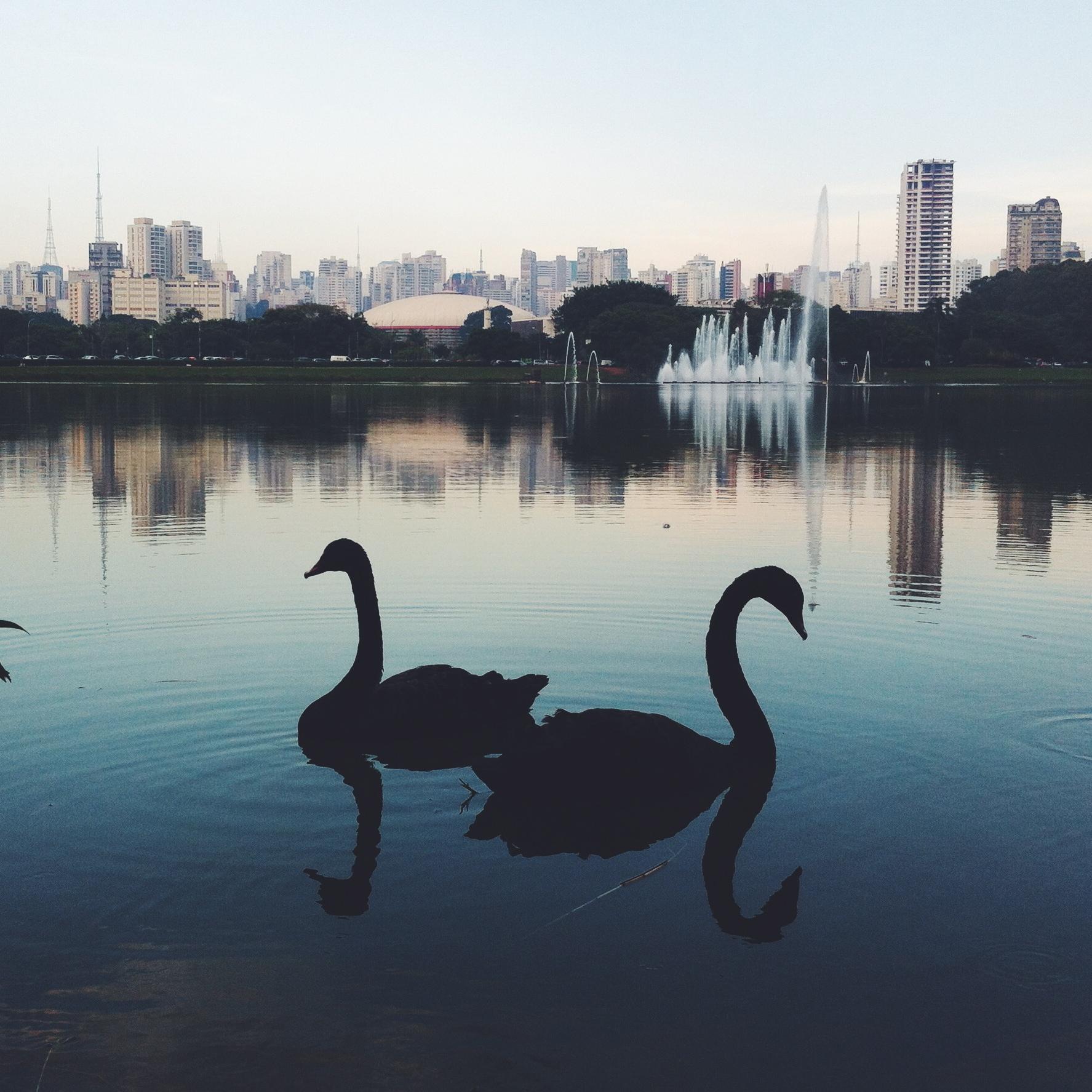 Ibirapuera_Park.JPG