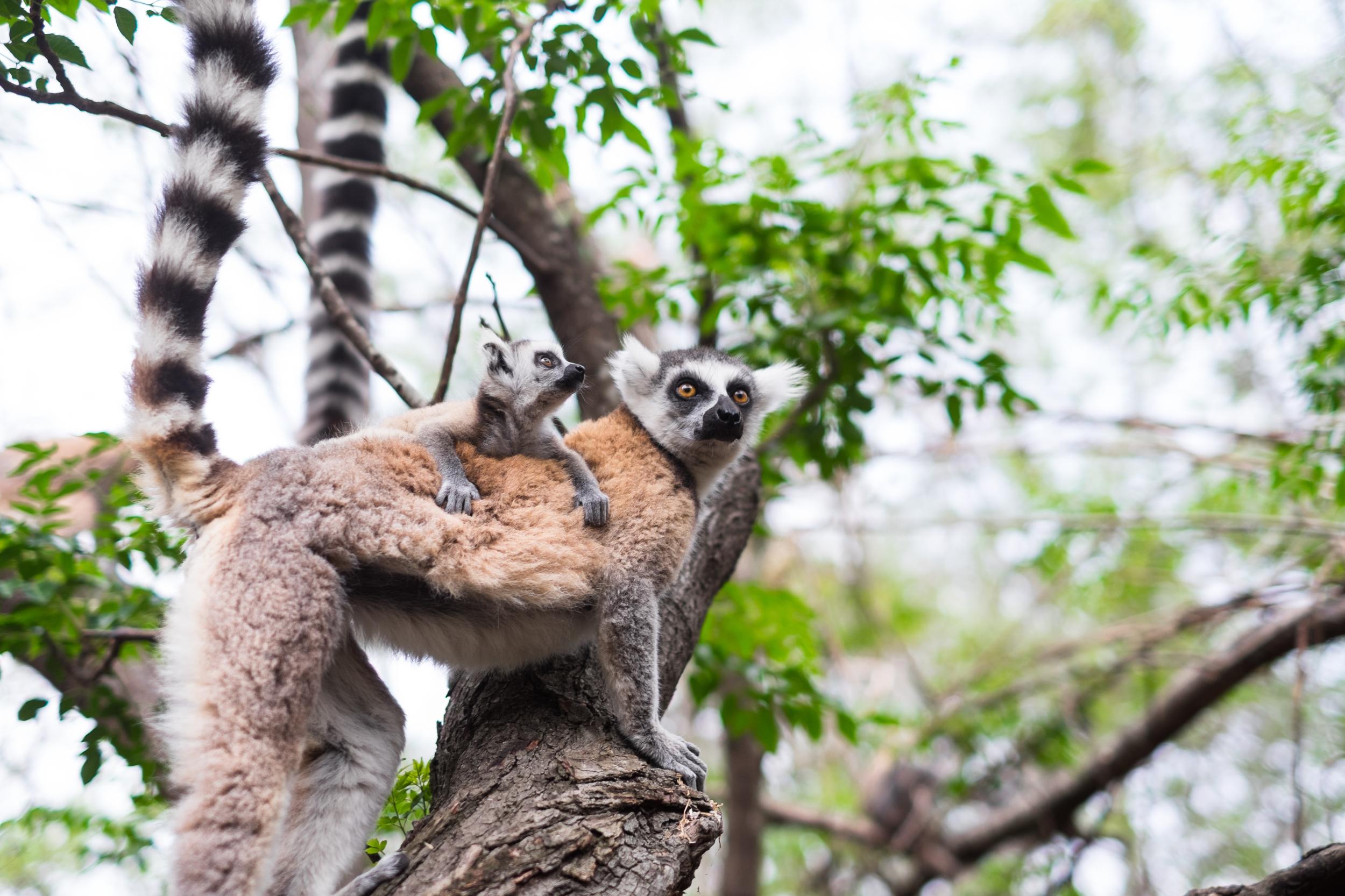 Reserve d'Anja - Madagascar.jpg