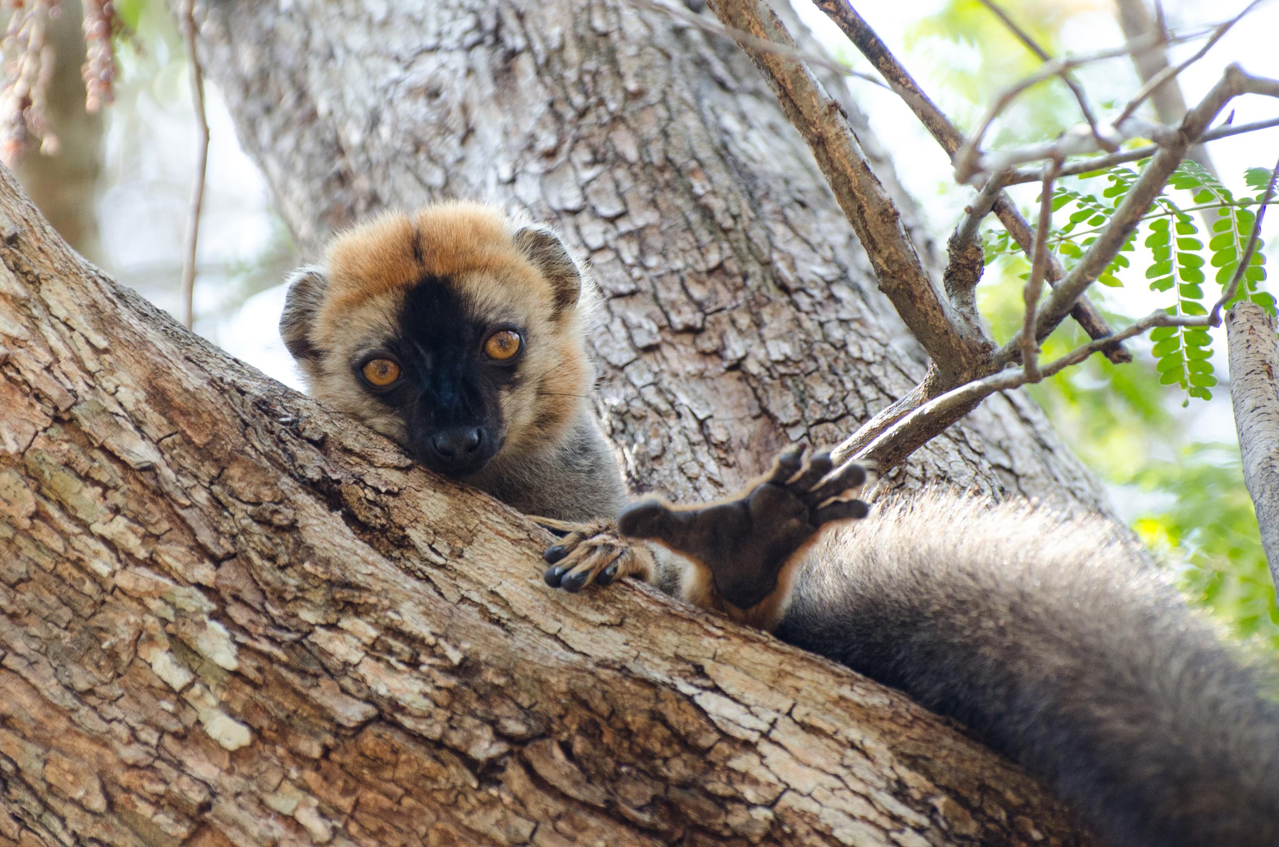 Kirindy - Madagascar.jpg