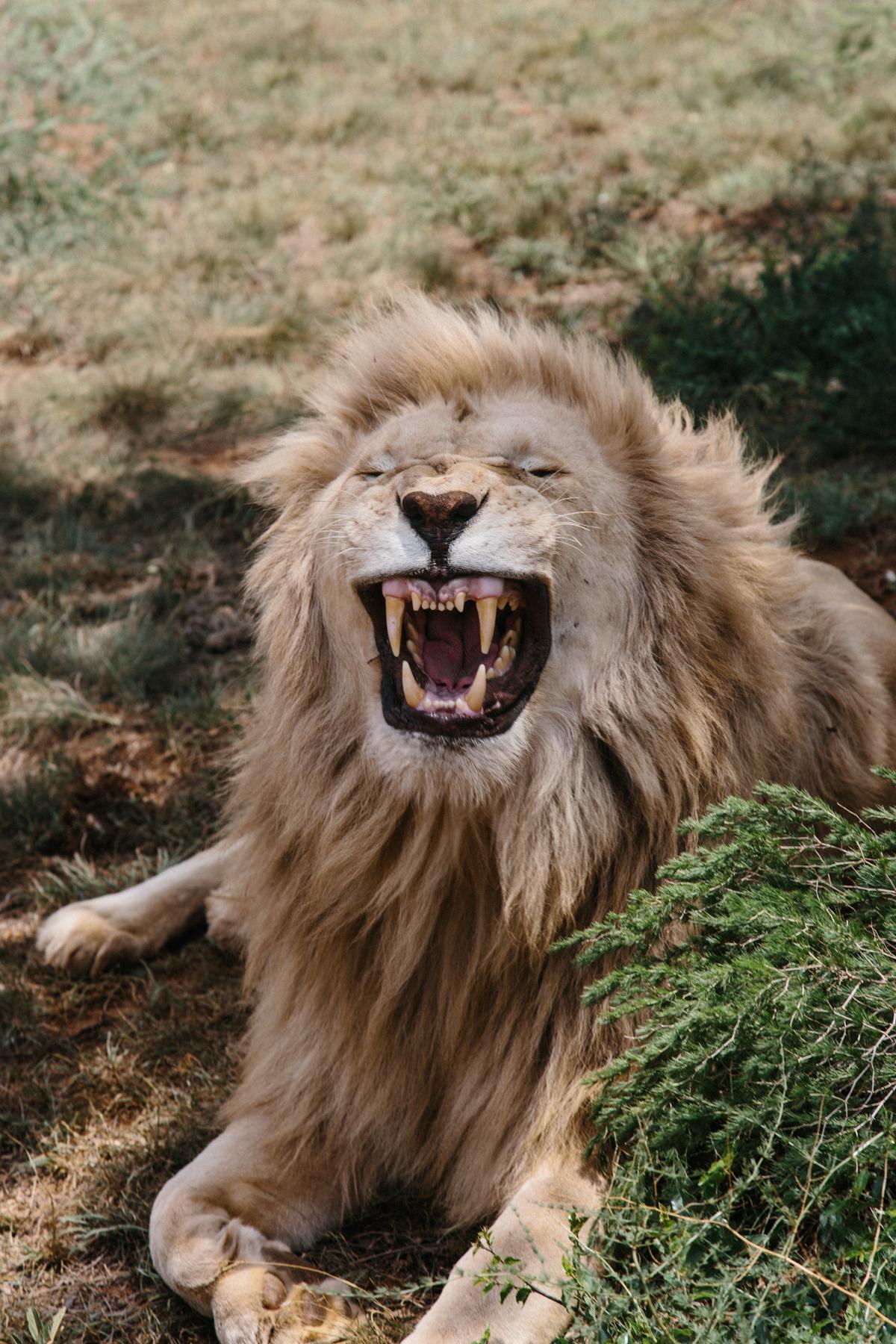 spiritedpursuit_lionpark_uber-14-2.jpg