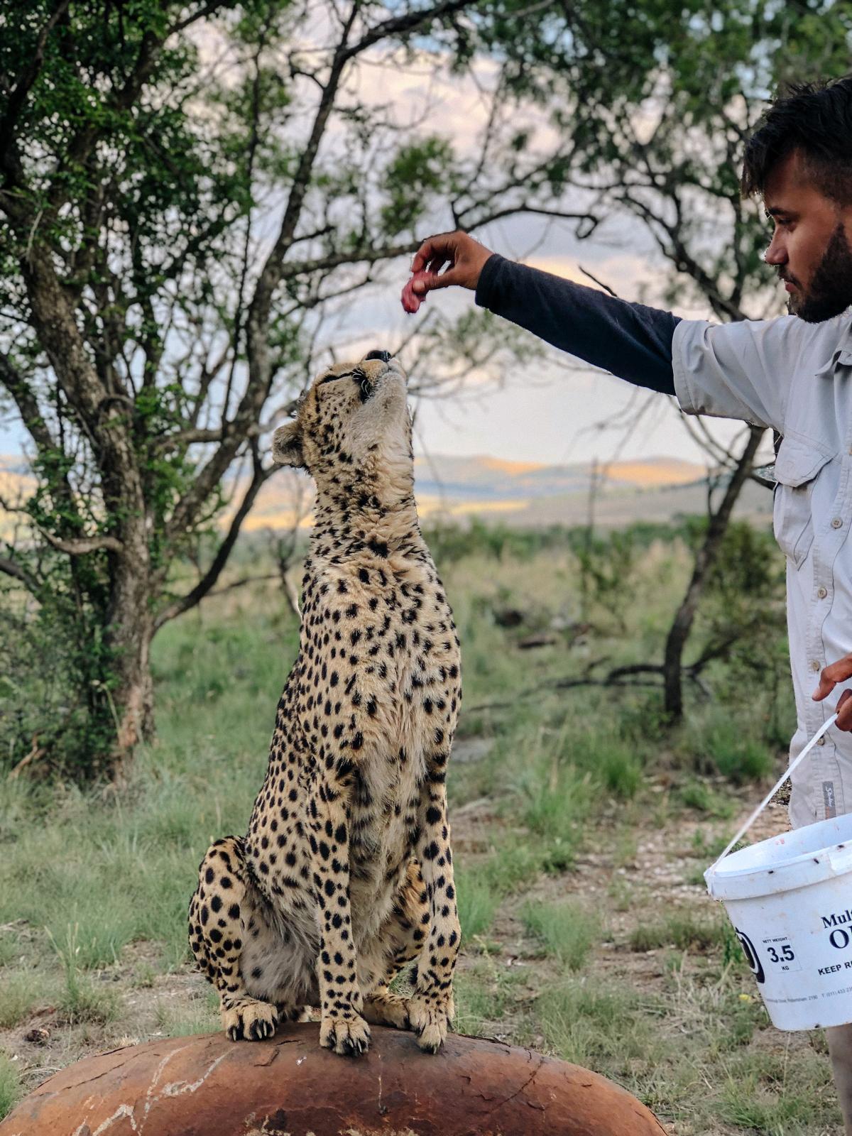 spiritedpursuit_leelitumbe_lionsafaripark-74.jpg