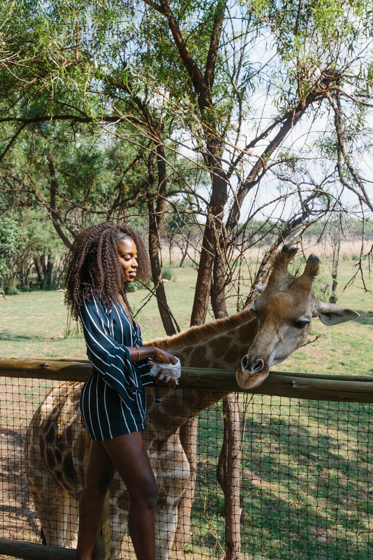 spiritedpursuit_leelitumbe_lionsafaripark-52.jpg