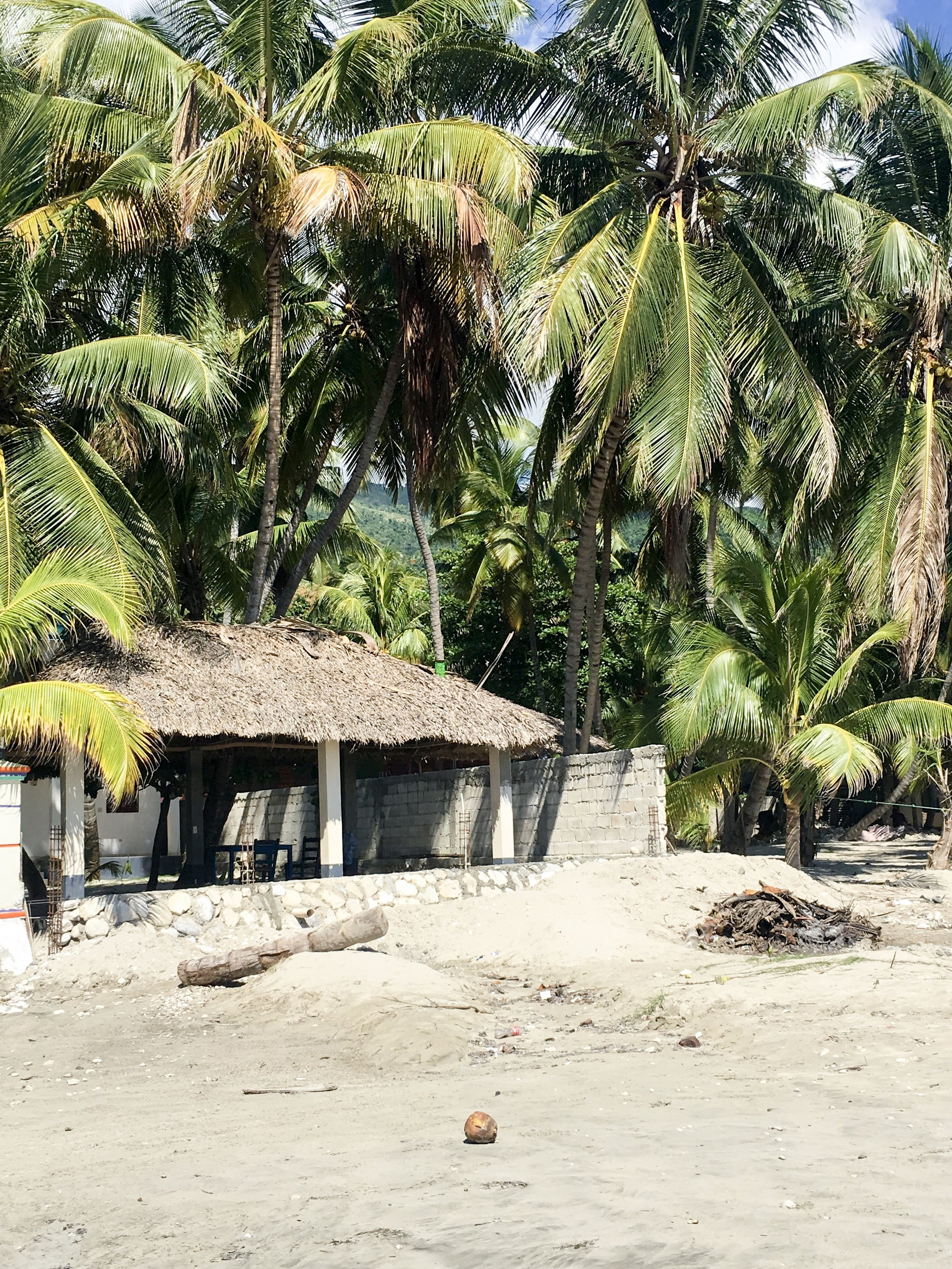Beach and palm trees.JPG