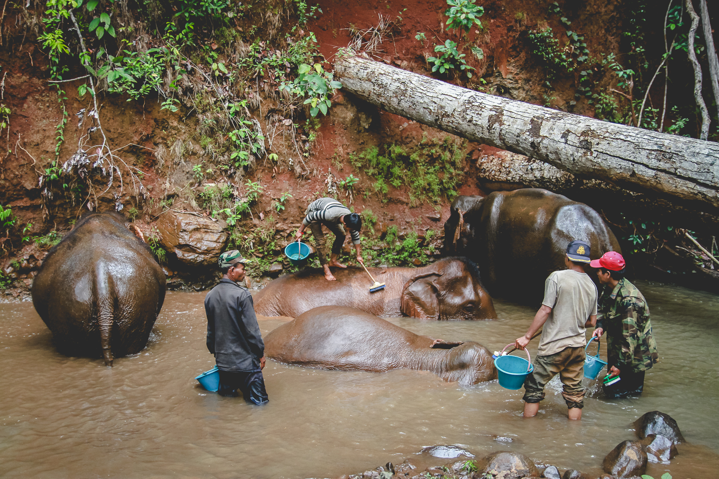 washing elephants vertical.jpg