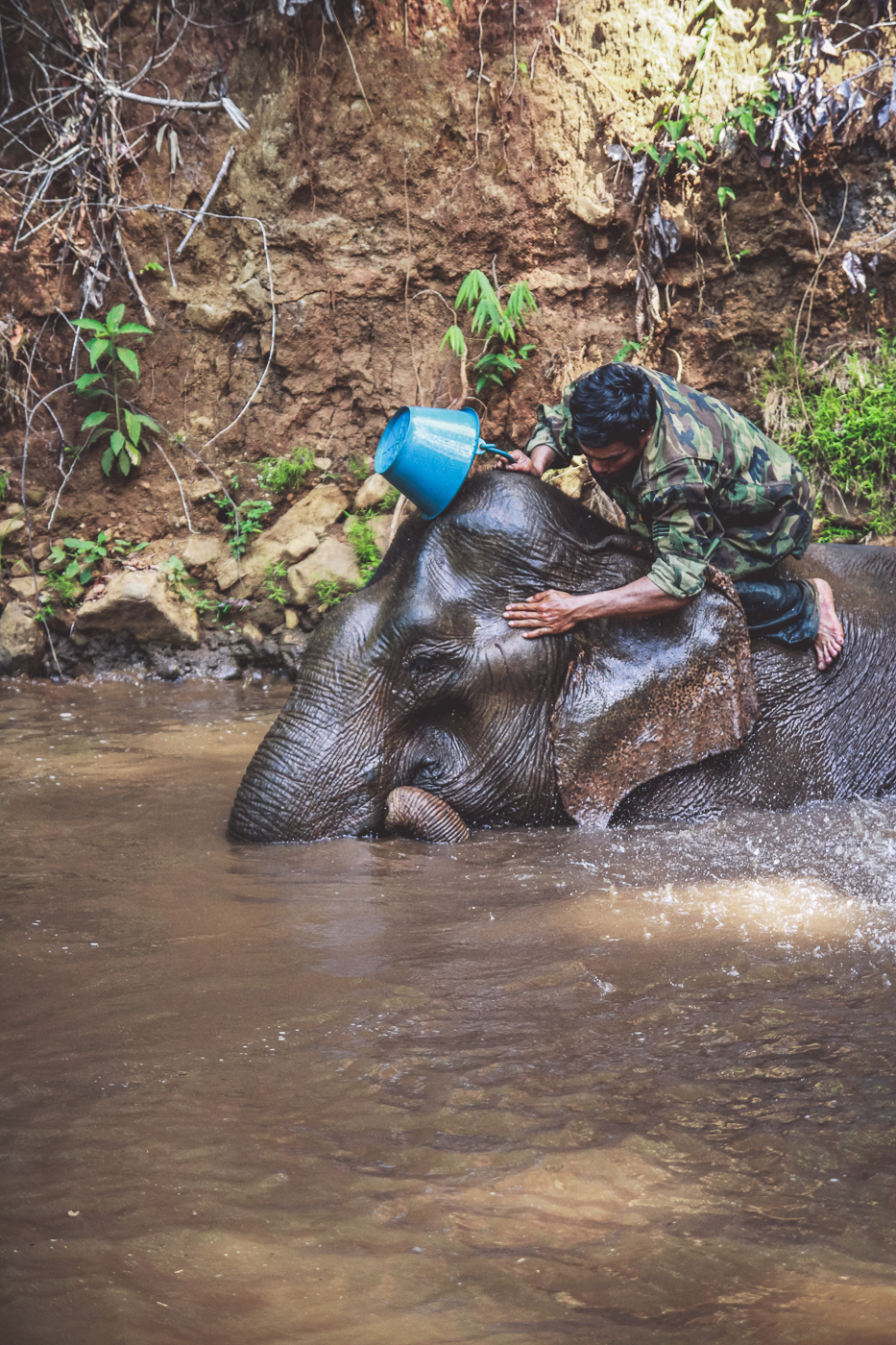 washing elephant.jpg