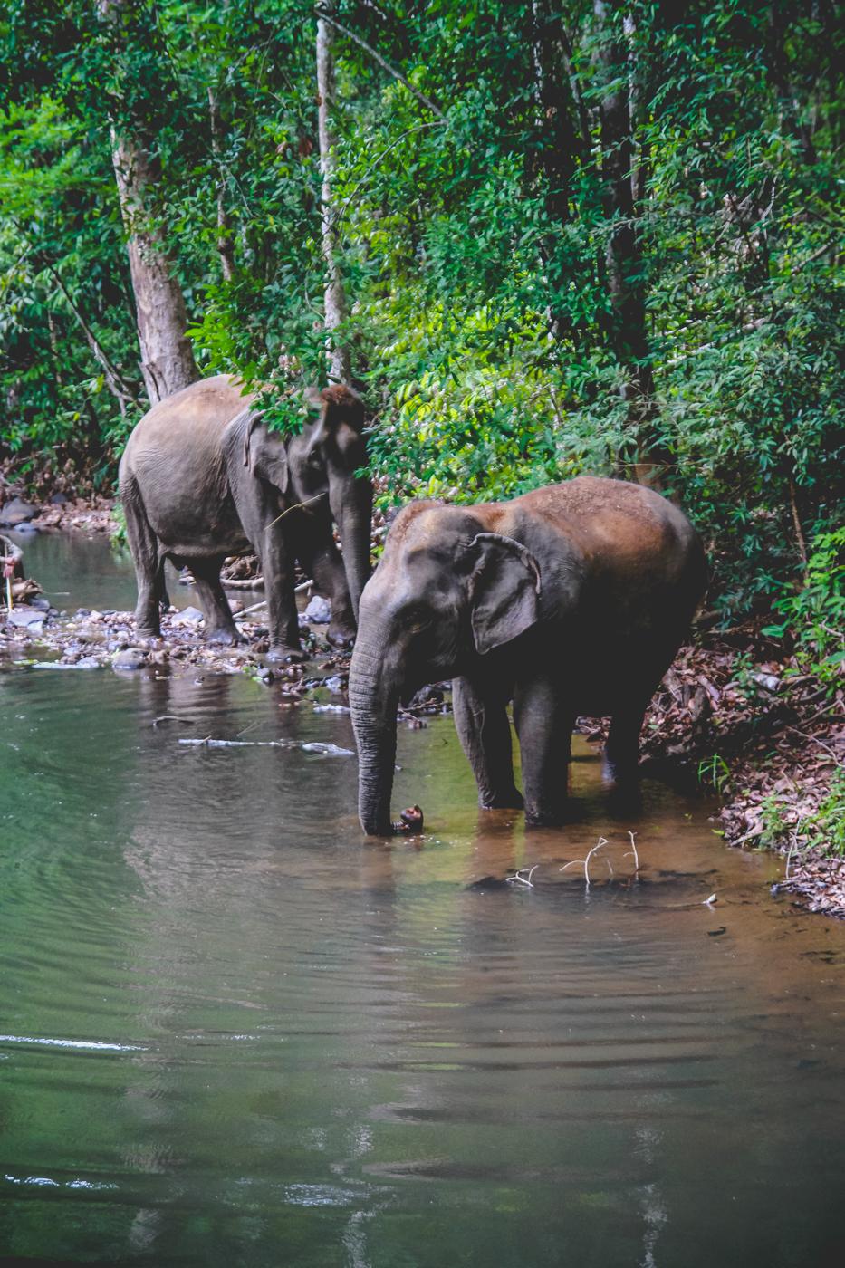 elephants wading.jpg
