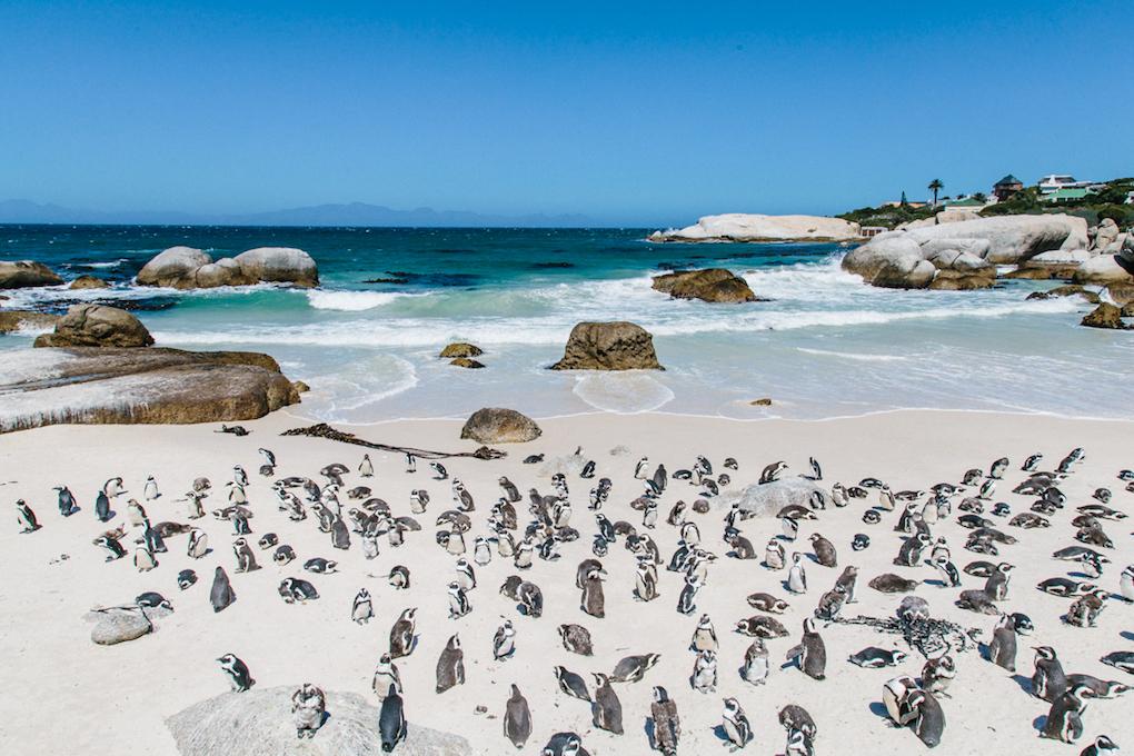 Spiritedpursuit_leelitumbe_capetown_southafrica-9-75.jpg